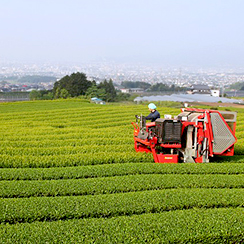 静岡県富士市 茶生産者